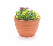 Petunia in a flower pot Stock Images
