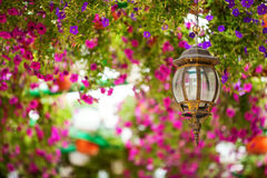Petunia flowers and lantern in  park Royalty Free Stock Image