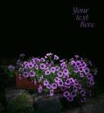 Petunia flowers in night park Royalty Free Stock Photo