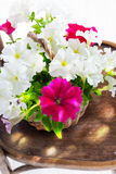 Petunia flowers in a wattled basket Stock Image