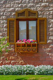 Petunia flowers on windowsill Stock Image