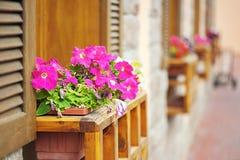 Petunia flowers on windowsill Stock Photography