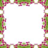 Petunia frame Stock Photo