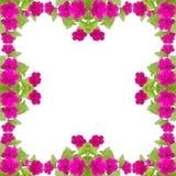 Petunia frame Stock Image