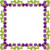 Petunia frame Royalty Free Stock Photography
