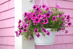 Petunia Hanging Basket Stock Images