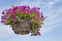 Petunia Hanging Basket Stock Image