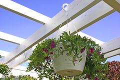 Petunia Hanging Basket royalty free stock photography