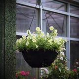 Petunia in hanging basket Royalty Free Stock Photography