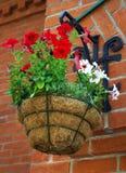 Petunia hanging cache-pot Royalty Free Stock Photography