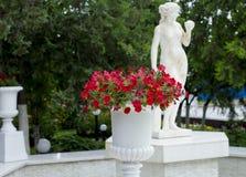 Petunia i en vit blomkruka på statyn royaltyfria bilder