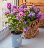 Petunia i pelargonium na balkonowym okno Fotografia Royalty Free