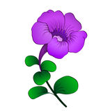 Petunia isolated Royalty Free Stock Photo