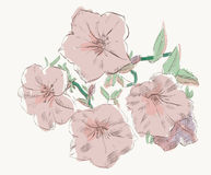 Petunia kwiat Zdjęcie Stock
