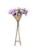 Petunia kwiat zdjęcie royalty free