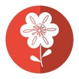 petunia kwiatu dekoraci wizerunku cień Obrazy Royalty Free