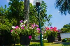 Petunia kwiatu obwieszenie na lampie z niebieskim niebem i zieleni drzewem jako tło na parku - fotografia zdjęcie royalty free
