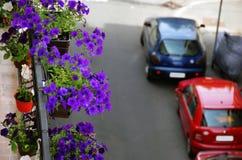 Petunia op balkon Royalty-vrije Stock Afbeeldingen