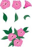 Petunia pink Stock Photo