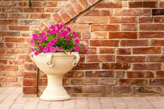 Petunia pot Stock Image