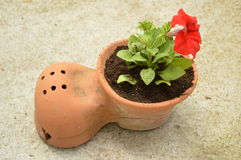 Petunia. The pot in the shape of shoes Royalty Free Stock Images