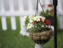 Petunia's in Hanging Basket. Red and Yellow Petunia's in a hanging  basket by black pole in front yard Stock Photos