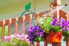 Petunia spraying Royalty Free Stock Images