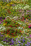 Colourful flowers background royalty free stock image