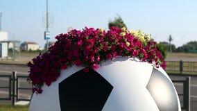 Petunia on a street vase in the form of a soccer ball. Сочи, Олимпийский парк stock video footage