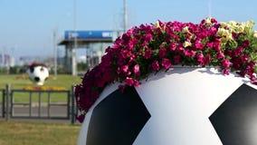 Petunia on a street vase in the form of a soccer ball. Сочи, Олимпийский парк stock footage