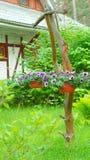 Petunia violeta en las macetas foto de archivo