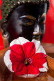 Petunia in water. A Buddha statue in the background of this relaxing images Royalty Free Stock Image