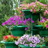Petuniabloemen Royalty-vrije Stock Fotografie