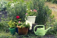 Petunian blommar i trädgården efter regnet royaltyfri fotografi