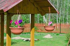 Petunias bien de la decoración en potes Fotos de archivo