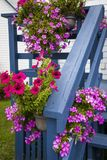 Petunias on blue porch Royalty Free Stock Photography