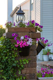Petunias on the Brick Pillar Royalty Free Stock Photography