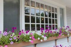 Petunias en caja de ventana Foto de archivo libre de regalías