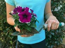 Petunias en una espada Imágenes de archivo libres de regalías