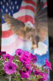 Petunias with flag background. Petunias with American flag motif (banner) in the background Stock Photography