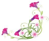Petunias, flores del verano Imagenes de archivo