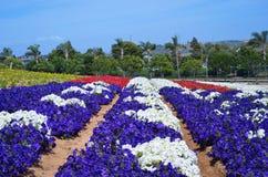 Petunias Flower Field Royalty Free Stock Photo