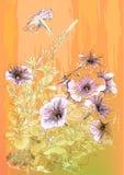 Petunias flowers Stock Photos