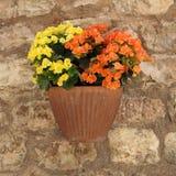 Petunias flowers in pot Royalty Free Stock Photo