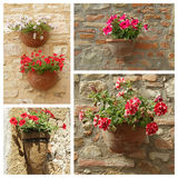Petunias flowers in pots collage Royalty Free Stock Images