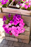 Petunias Hanging on the Brick Pillar Royalty Free Stock Photos