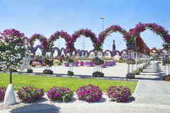 Petunias in the Miracle Garden Royalty Free Stock Image