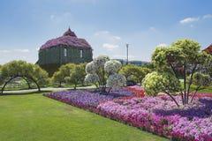 Petunias in the Miracle Garden. Dubai royalty free stock photography