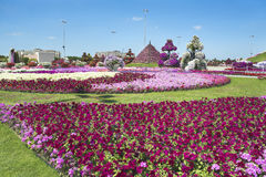 Petunias in the Miracle Garden. Petunias and sculpture of cow in the Miracle Garden Dubai stock photography