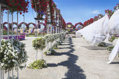 Petunias in the Miracle Garden Stock Photos